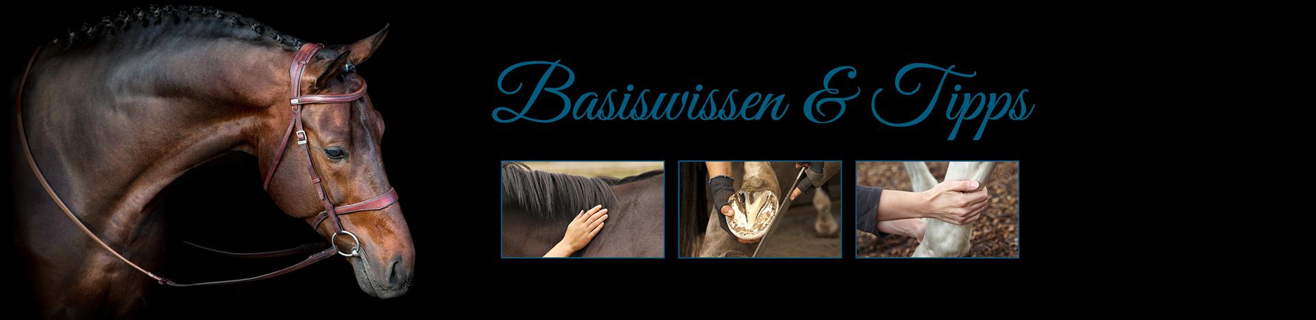 Bannerbild Raika-Basiswissen und Tipps